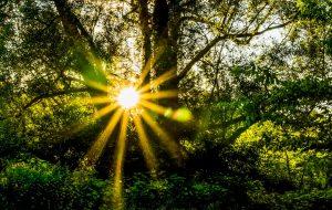 Wald und Sonnenstrahlen