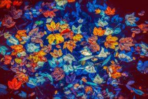 Blätter im Wasser