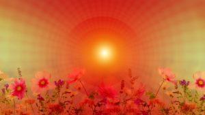 Meditation-Blumen