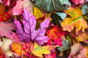 Bunte Herbstlätter