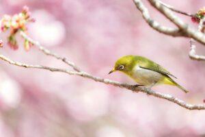japanischer vogel